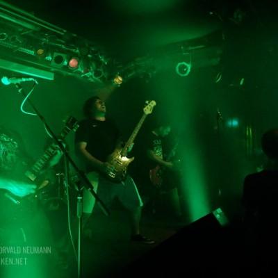 larvae-09